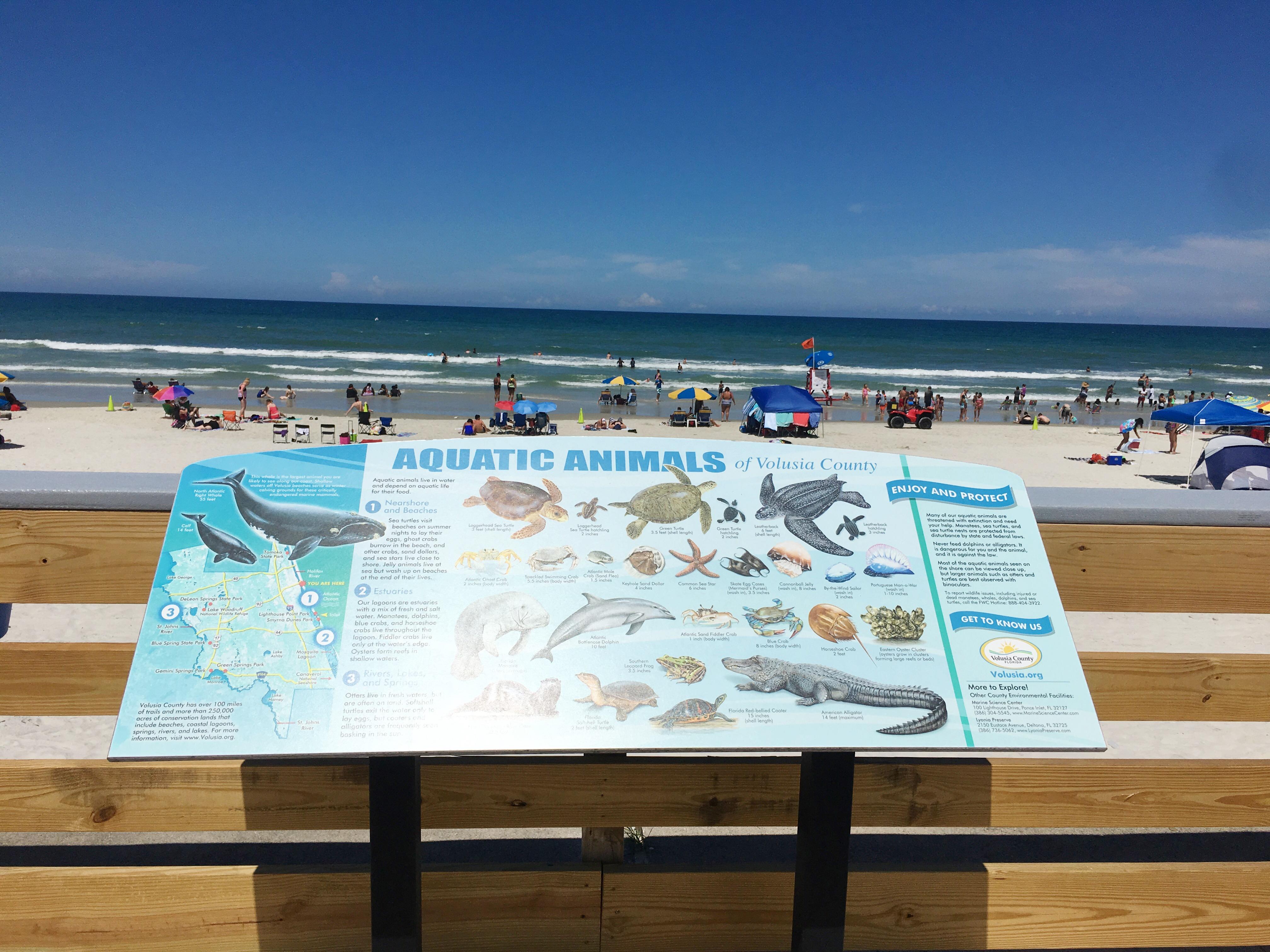 Gator Gifts Daytona Beach
