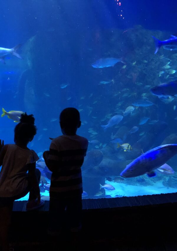 The Perfect Day Out at Sealife Orlando