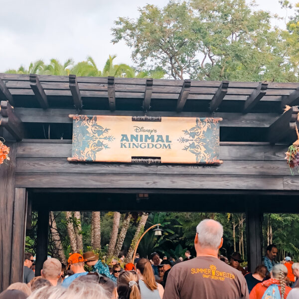 animal kingdom disney world